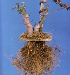 An Ingenious Technique | Bonsai BarkBonsai Ideas More Pins Like This At FOSTERGINGER @ Pinterest