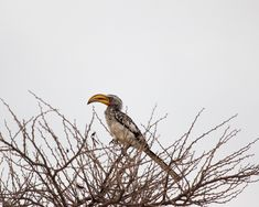 Etosha - Self Drive Safari Vs. Safari, Self Driving, Bald Eagle, Animals, Zoological Garden, Elephants, Animales, Animaux, Animal