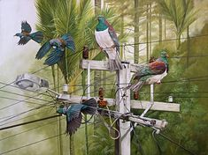Position of Power by craig platt nz fine art bird and landscape artist Bird Artists, New Zealand Art, Nz Art, Maori Art, Bird Illustration, Bird Drawings, Art Festival, Asian Art, Landscape Paintings