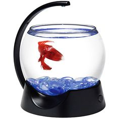 1000 images about improper betta homes on pinterest for Betta fish tanks walmart