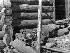 """Russian partisan lies dead after being tortured by the Germans. Standing orders stated that partisans, real or suspected, were to be summarily executed upon capture. Many German soldiers added torture as part of the """"fun."""""""