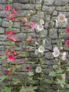 Josie - Could you make these flowers for my doll house - please!!!?  There are two more examples on my board.    miniature Hollyhocks Pascale Garnier