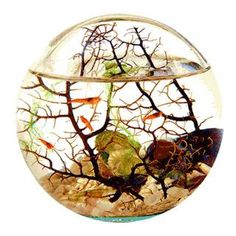 ecosphere; tiny self-sustaining ecosystem! I want one so bad!!!!!