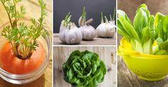 10 druhů zeleniny, kterou můžete pěstovat znova a znova Pesto, Onion, Carrots, Vegetables, Plants, Food, Paradise, Carrot, Onions