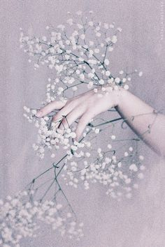 """""""little white flowers"""" White Flowers, Beautiful Flowers, Purple Petunias, Earth Goddess, Hand Images, Rich Kids, Pastel Purple, Perfect World, Background Vintage"""
