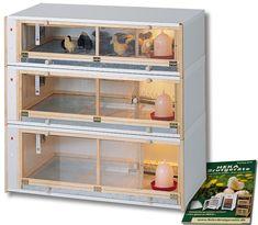 Chicken Shed, Easy Chicken Coop, Chicken Cages, Chicken Feeders, Chicken Runs, Chicken Coup, Poultry House, Backyard Poultry, Chickens Backyard