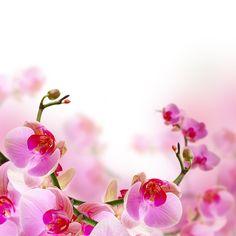 Фотообои Орхидеи, цветение | BipShop.BY | Легко и просто купить фотообои в Беларуси!