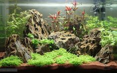 """""""Dragons' Sunset"""" aquascape, Dennerle Scaper's Tank"""