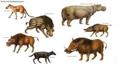 Swine And Hippopotamuses