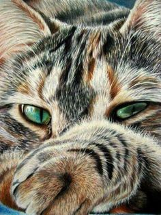Cats Drawing Simple Tabby Ideas For 2019 Pretty Cats, Beautiful Cats, Animals Beautiful, Gorgeous Eyes, Crazy Cats, I Love Cats, Cool Cats, Kittens Cutest, Cats And Kittens