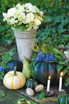 Autumn   Sonja Bannick Pictures