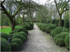 rolling boxwood hedges