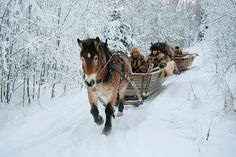 I want to go on a horse drawn sleigh ride this winter!!!!!