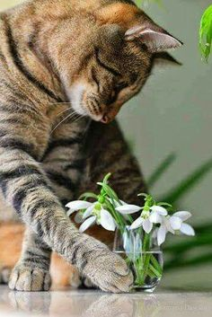 Tabby Cats oh you know that cat pushed those flowers right off whatever they are sitting on immediately after this picture was taken. Cute Cats And Kittens, I Love Cats, Crazy Cats, Cool Cats, Pretty Cats, Beautiful Cats, Animals Beautiful, Cute Animals, Gatos Cats
