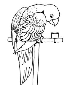 Printable Bird Coloring Pages...parrot...Charlie?