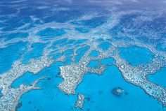 A small portion of the world's largest coral reef system, the Great Barrier Reef
