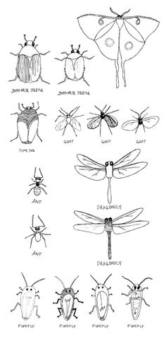 insect drawings (mixing two things, ex. bugs and light bulbs)