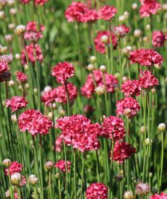 15 Impossible-to-Kill Outdoor Plants | With summer in full swing, it's hard not to admire the yards and gardens around town that are filled with greenery and colorful blooms. If you've always assumed that your yard was too dry, too shady, or that the soil was too sandy to support such beautiful plants—guess again. In fact, these common problems may just inspire you to get more creative with your plant picks. With expert advice and care...