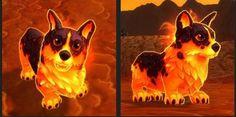 Warlords of Draenor Guide Updates: Professions and Battle Pets - Wowhead News- I sooooooo want this Molten Corgi World Of Warcraft News, Wow Battle, Warlords Of Draenor, Wil Wheaton, Tenth Anniversary, Warcraft Art, Game Art, Nerdy, Corgi