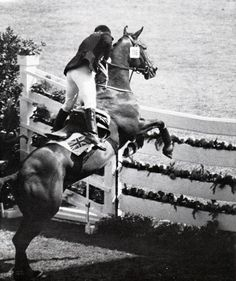 Ann Moore (* August 1950 in Birmingham, England) won a silver medal in the individual show jumping at the 1972 Munich Olympics on her horse Psalm. Ann Moore is the last British rider to win an individual medal at the Olympic show jumping event since All The Pretty Horses, Beautiful Horses, Munich, Majestic Horse, White Horses, Show Jumping, Horse Pictures, Horse Girl, Show Horses