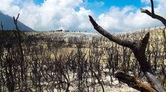 Hutan Mati gunung Papandayan Jawa Barat Terkesan Seram Namun Penuh Keindahan - Jawa Barat