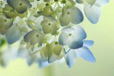'Flower of June'