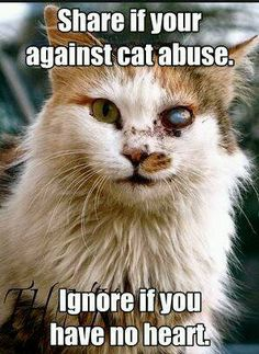 Share if your against cat abuse Ignore if you have.jpg 298×408 pixels
