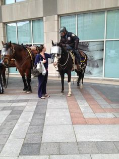 Twitter / @SeattleSullivan: Even the horses are in riot gear. (Seattle)