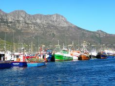 MUST TRY - fish and chips at Houtbaai - great views of the local fishermen's boats and even feed the seals Great View, Cape Town, Seals, The Locals, Places Ive Been, South Africa, Coast, Chips, Fish