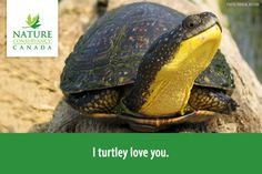 """I turtley love you."""