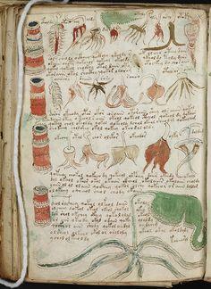 """Voynich manuscript 4  500 year old Art Brut / Le manuscrit de Voynich -- de """"l'art brut"""" d'il y a 500 ans?  Une """"carte mentale"""" sous forme de livre..."""