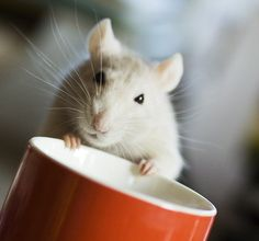 This is decaf, right?... cause you know I can't have caffeine. It makes me too jittery. Photo: AMY STOCKLEIN