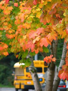 Autumn / School buses and falling leaves. Seasons Of The Year, Best Seasons, Harvest Time, Fall Harvest, Autumn Day, Autumn Leaves, Red Leaves, Autumn Summer, Lovely Smile