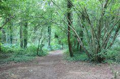 La forêt, quartier de mon enfance!