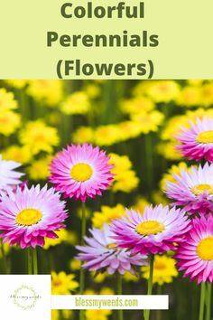 Make your yard POP with these colorful perennials. Ideas for full sun, shade, landscapes, garden, flowers and more. Big Flowers, Blooming Flowers, Growing Flowers, Planting Flowers, Flower Gardening, Gardening Tips, Best Perennials, Shade Perennials, Flowers Perennials