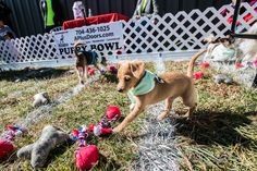 Some more updates from our Puppy Bowl - 8 dogs adopted so far! Photography by Chuck Eaton Photography.