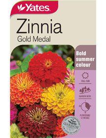 Zinnia 'Gold Medal'