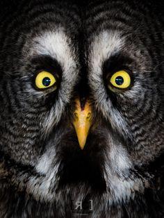 Owl's Wisdom by Ricardo Catarro on 500px