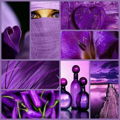 Best Of Purple Different Shades