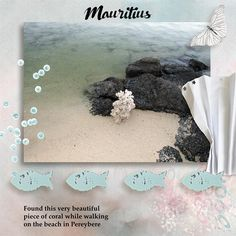 Serenity Beach by Lara's Digi World @ Digital Scrapbook Studio. You can purchase all kits individually, or the bundle or the mega bundle.............Wow! what amazing choices Lara gives you. Everything about this wonderful bundle is soft, serene and very romantic!  https://www.digitalscrapbookingstudio.com/digital-art/bundled-deals/serenity-beach-mega-bundle-with-2-fwp-bonuses/