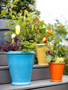 Grow your vegetables in bright pots for a pop of color. More gardening trends: http://www.bhg.com/gardening/vegetable/vegetables/grow-vegetables-in-containers/?socsrc=bhgpin031613vegcontainer