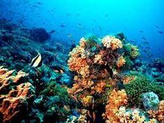Los biomas acuáticos pueden ser marinos (agua salada) o dulceacuícolas. Los biomas marinos son básicamente dos: el oceánico o pelágico y el litoral o nerítico.Los biomas dulceacuícolas son básicamente dos: las aguas estancadas (lénticas) de lagos y lagunas y las aguas corrientes (lóticas) de ríos y arroyos