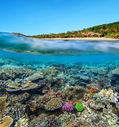 Dive in to Fiji's latest resort here. The 140 acre Kokomo Fiji Island Resort is bringing a new level of luxury to the island.