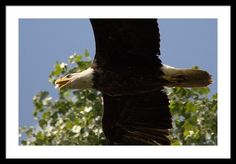 Dougherty Iowa Eagles 3 Framed Print By Bonfire #Photography