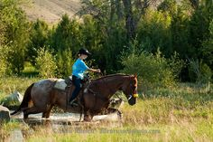 Trail Riding, young girl,  crosses water, Quarter Horse, Montana