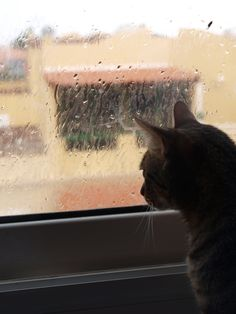 #Tom #Cat #Puppys #LoveAnimals #MyMonsters #MyPets #CanaryIsland #Rain