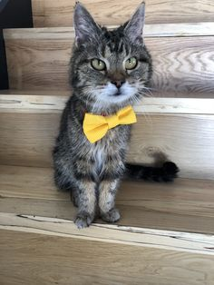 Hand made Dog Collars, & Bow Ties for your Best Friend! Cat Bow Tie, Bow Ties, Your Best Friend, Best Friends, Collars, Etsy Seller, Bows, Creative, Cute