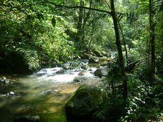 Taman Nasional Halimun Salak (Bogor, Indonesia) - Review