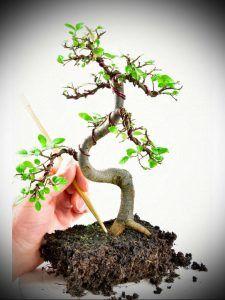 Bonsai Pruning Tips - Beauty Bonsai Pruning Plants, Bonsai Pruning, Tree Pruning, Bonsai Garden, Indoor Bonsai Tree, Indoor Trees, Conifer Trees, Deciduous Trees, Concrete Leaves
