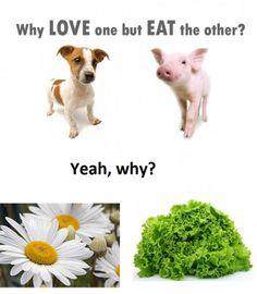 Vegetarians Please Explain